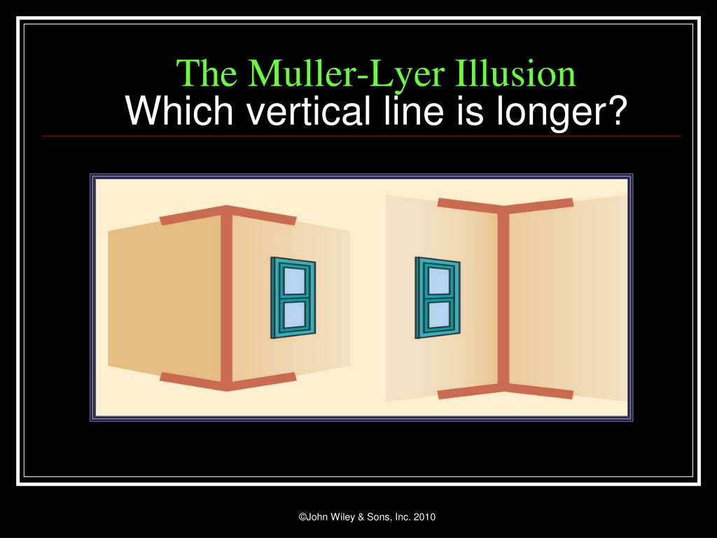 The Muller-Lyer Illusion