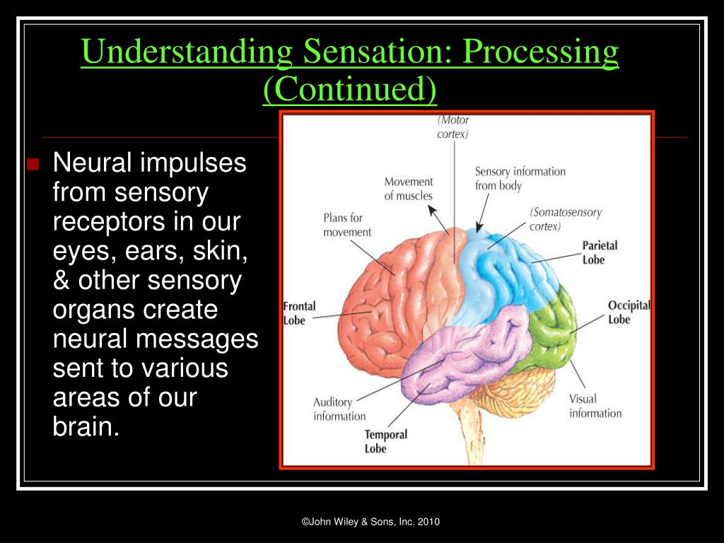 Neural impulses from sensory receptors in our eyes, ears, skin, & other sensory organs create neural messages sent to various areas of our brain.