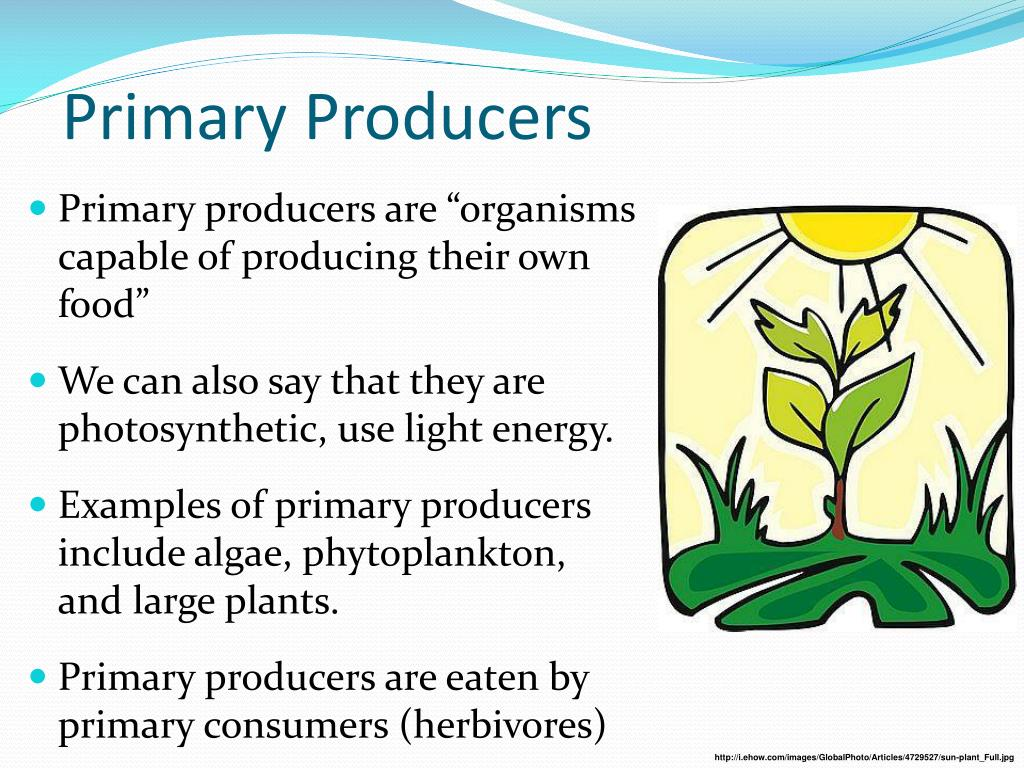 Primary Consumers Examples PPT - Food Chains and ...