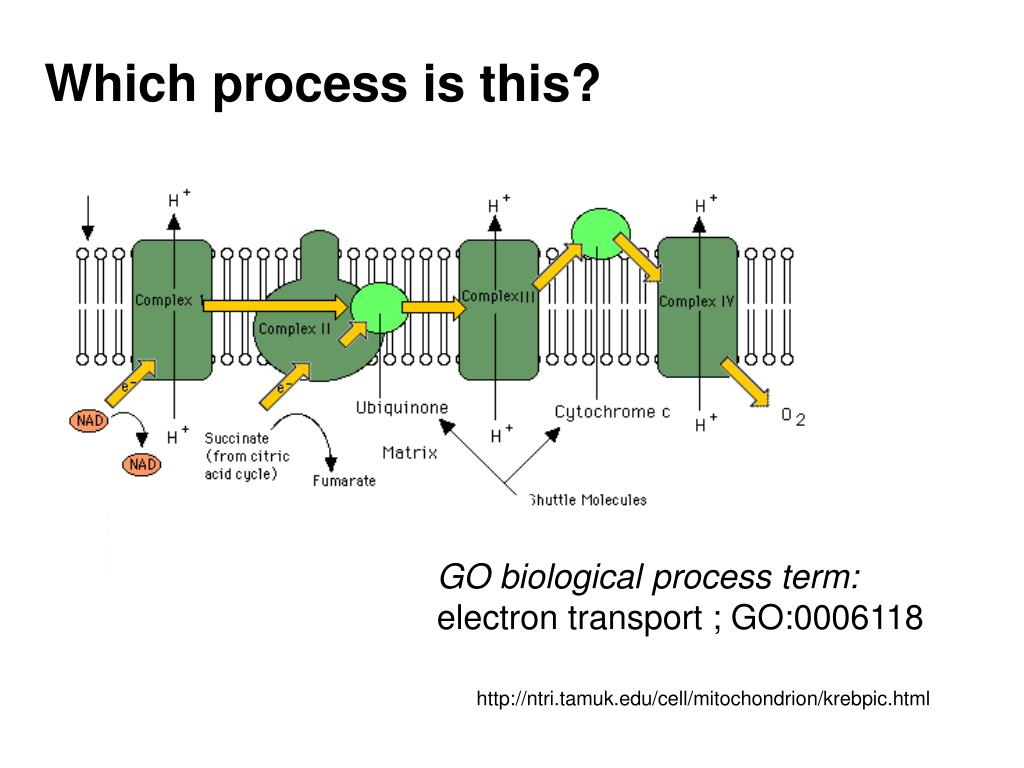 Which process is this?