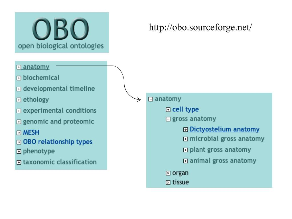 http://obo.sourceforge.net/