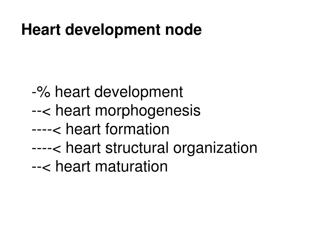 Heart development node