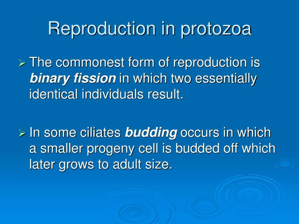 Reproduction in protozoa