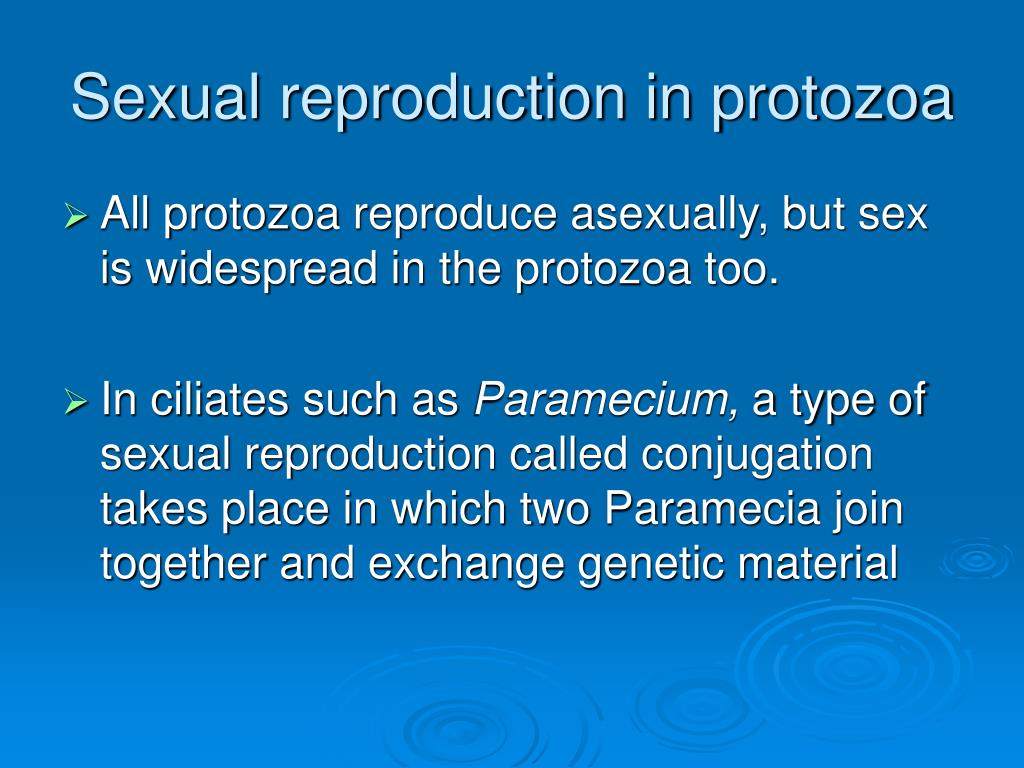 Sexual reproduction in protozoa
