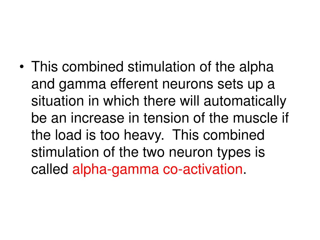 This combined stimulation of the alpha and gamma efferent neurons sets up a situation in which there will automatically be an increase in tension of the muscle if the load is too heavy.  This combined stimulation of the two neuron types is called