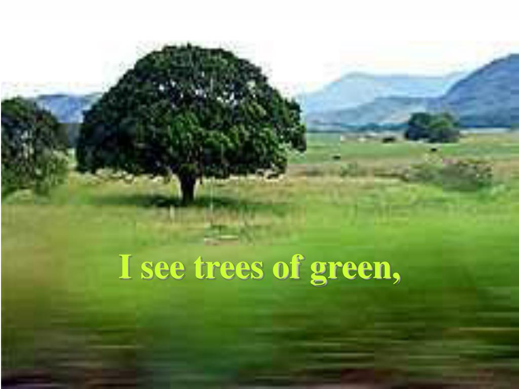 I see trees of green,
