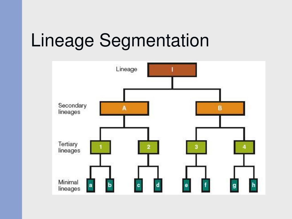 Lineage Segmentation