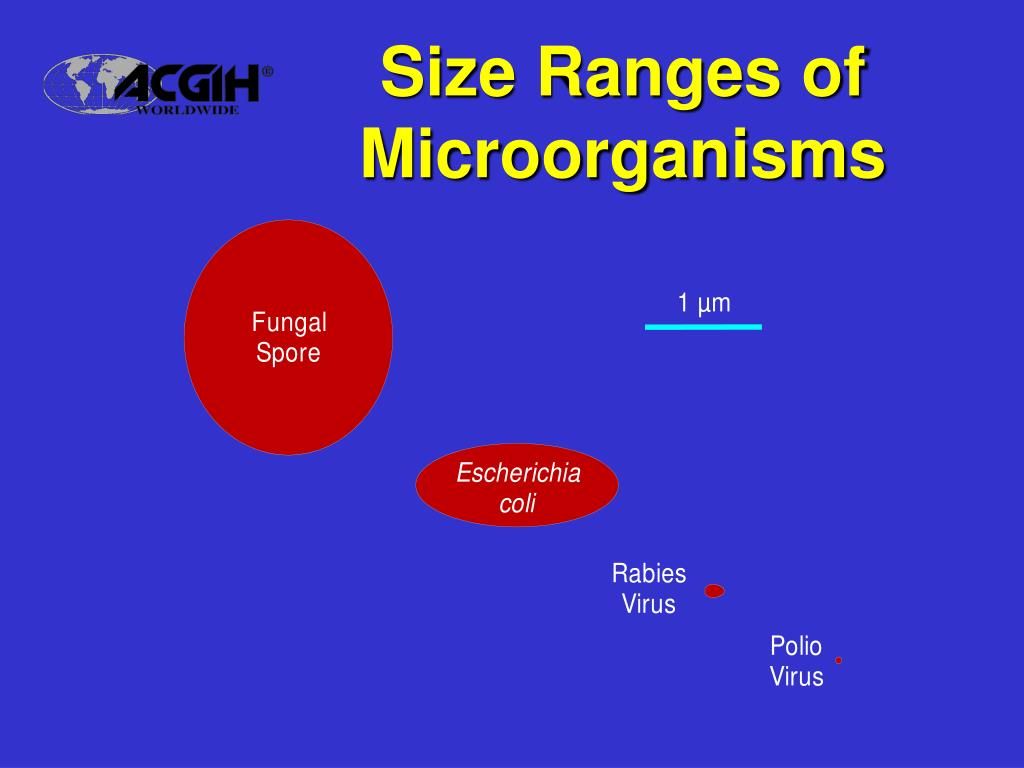 Size Ranges of Microorganisms