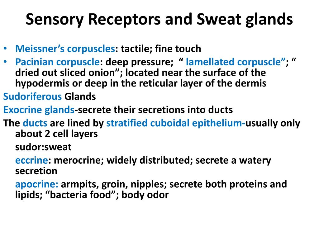 Sensory Receptors and Sweat glands