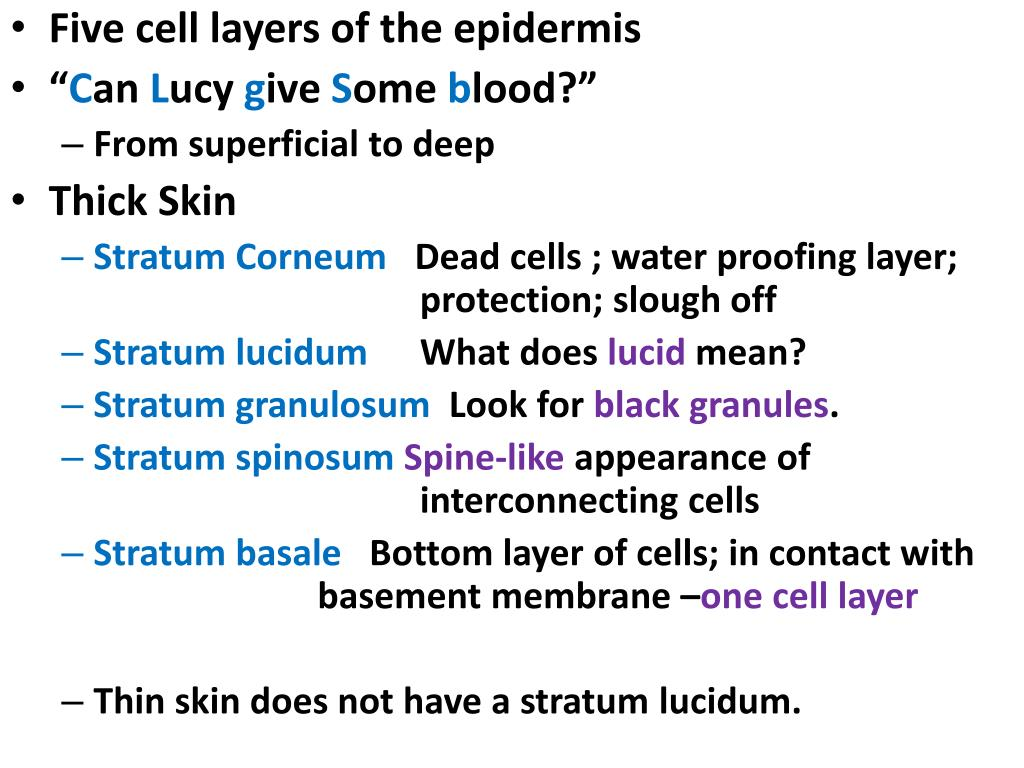 Five cell layers of the epidermis