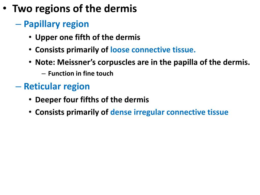 Two regions of the dermis