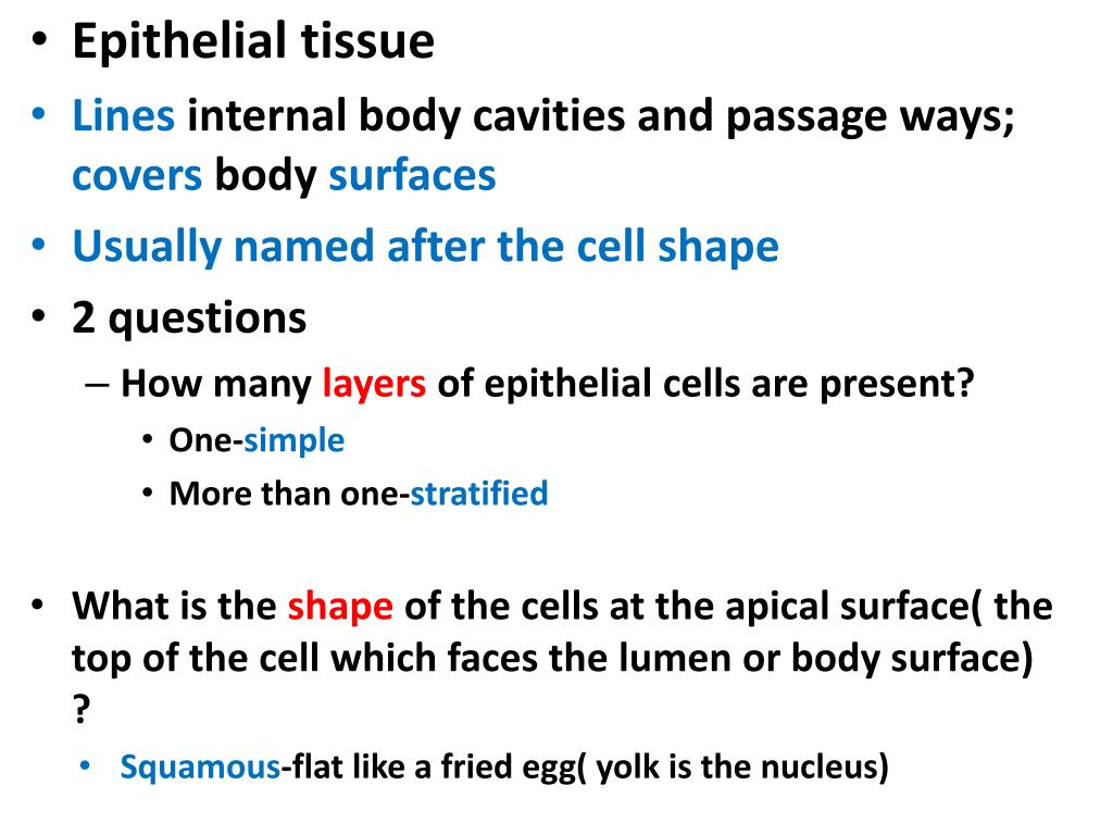 Epithelial tissue