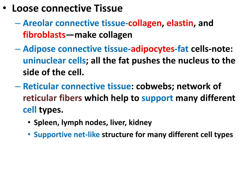 Loose connective Tissue