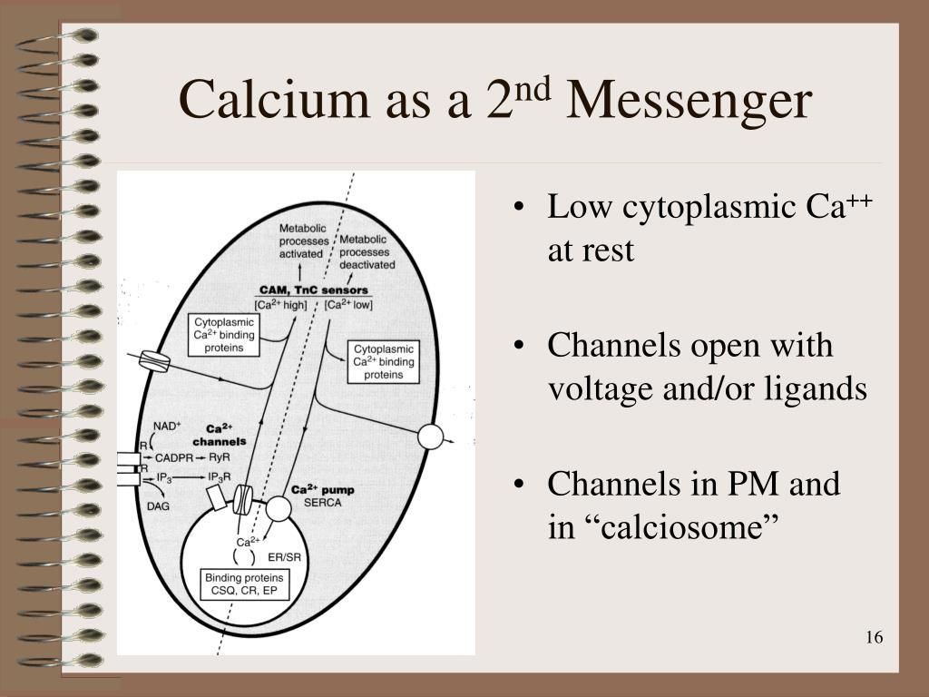 Calcium as a 2