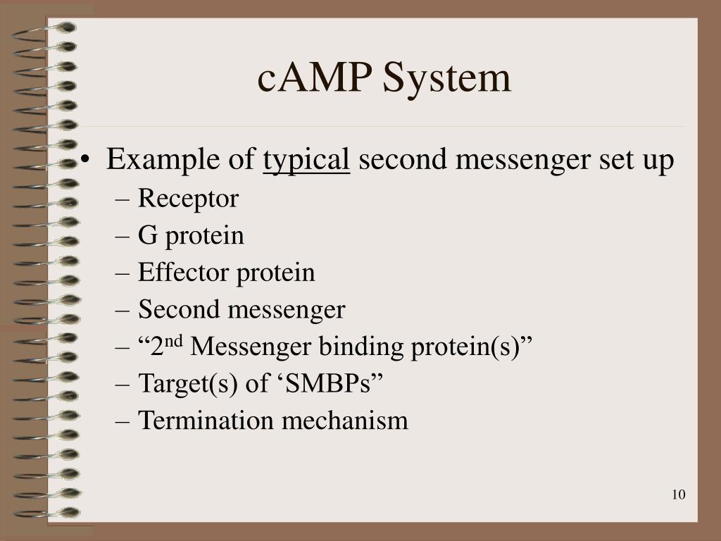 cAMP System