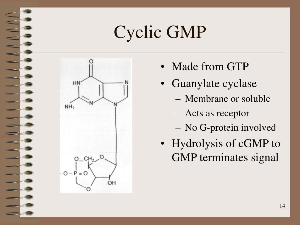 Cyclic GMP