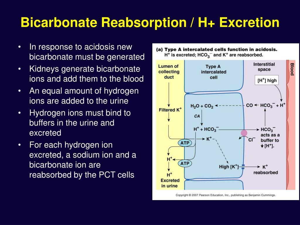 Bicarbonate Reabsorption / H+ Excretion