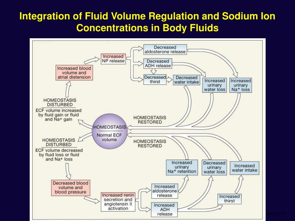 Integration of Fluid Volume Regulation and Sodium Ion Concentrations in Body Fluids