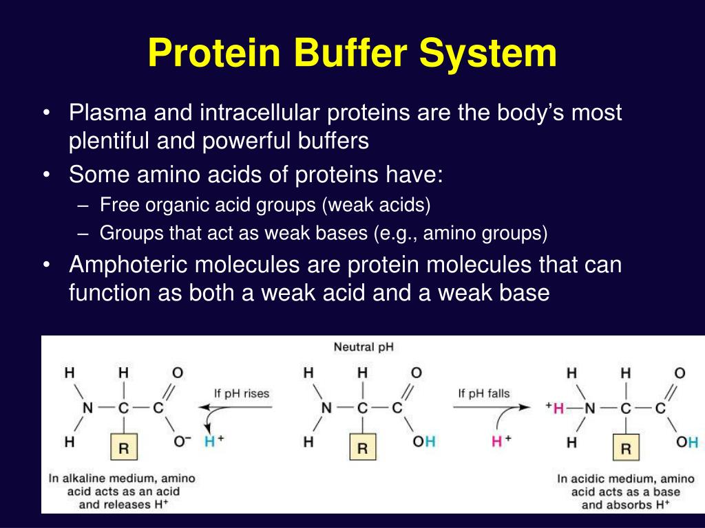 Protein Buffer System