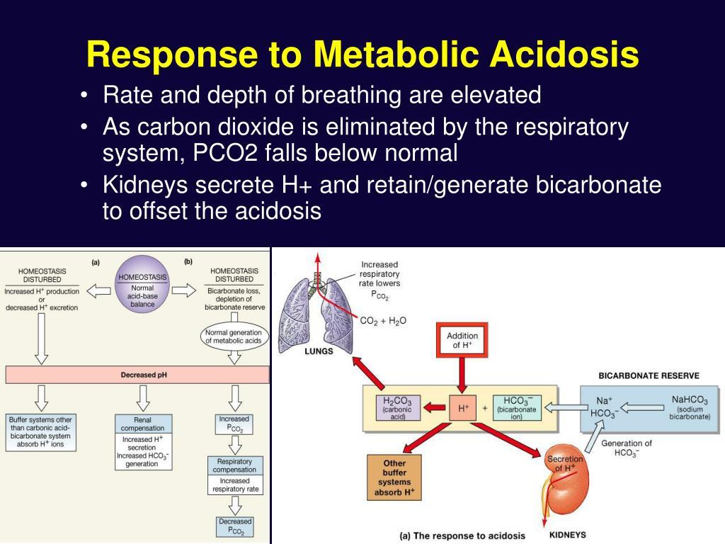 Response to Metabolic Acidosis