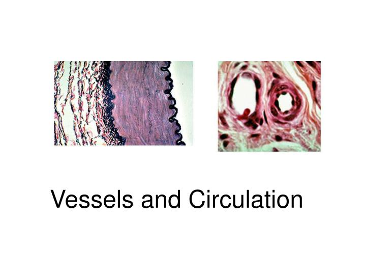 Vessels and circulation