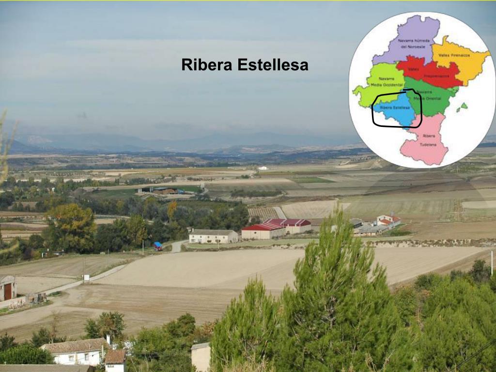 Ribera Estellesa