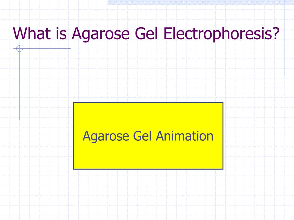 agarose gel electrophoresis Agarose gel is used in the process of electrophoresis, which separates fragments of dna according to their structure and dimensions dna molecules are generally.