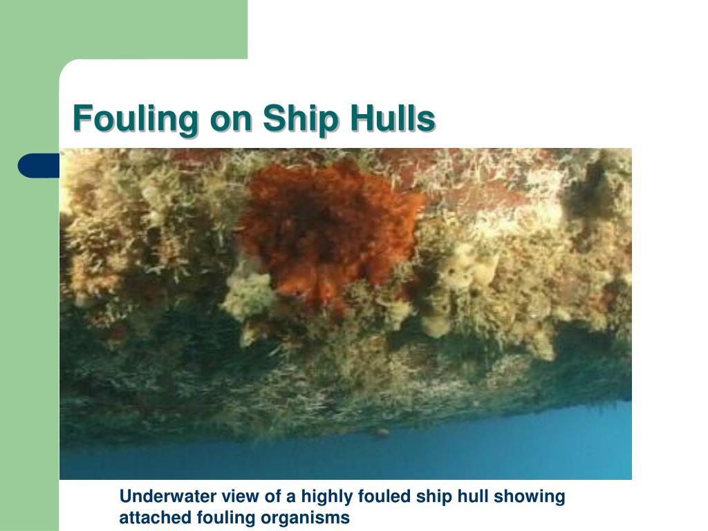 Fouling on Ship Hulls