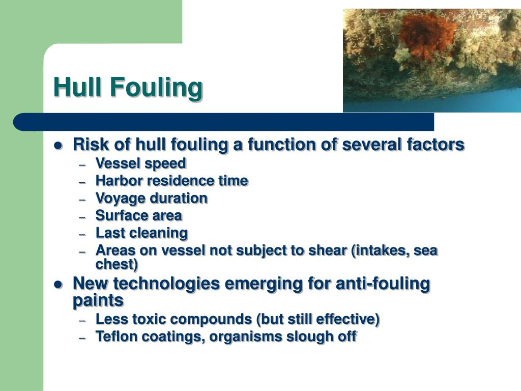 Hull Fouling