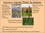 invasive aquatic plants in indiana