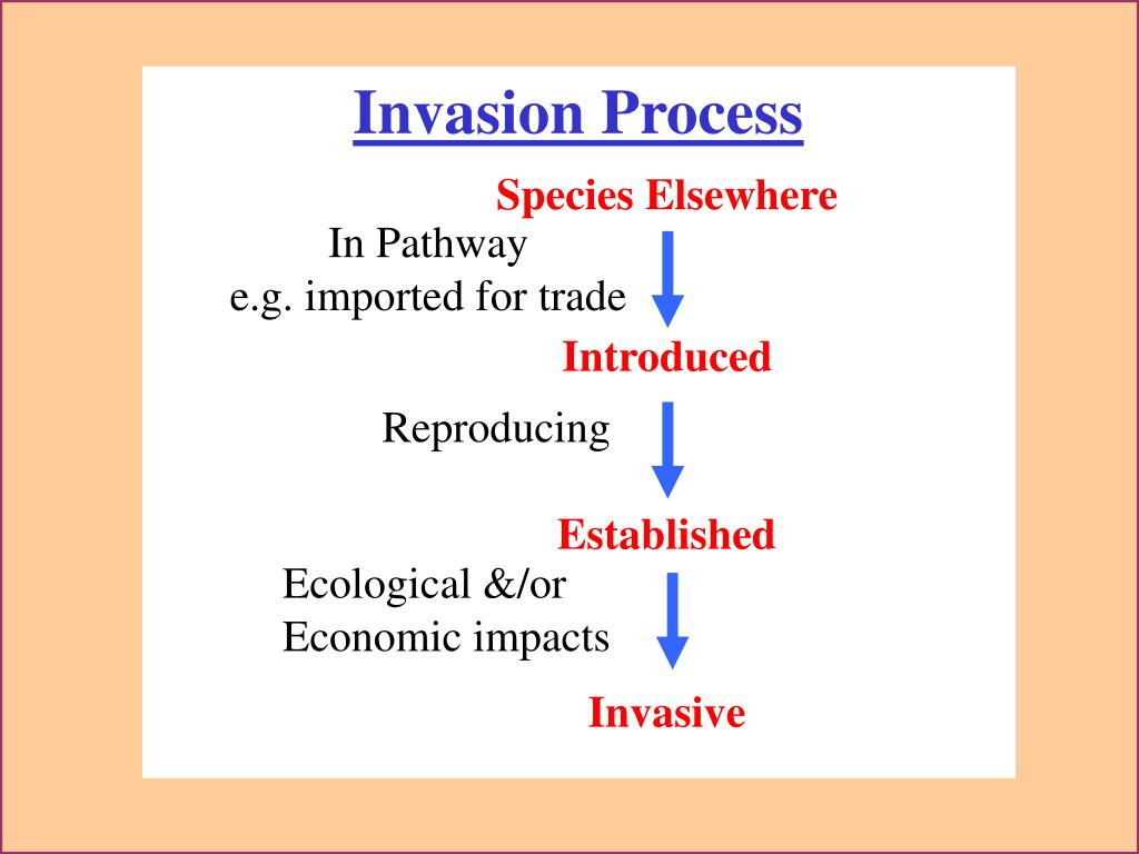 Invasion Process