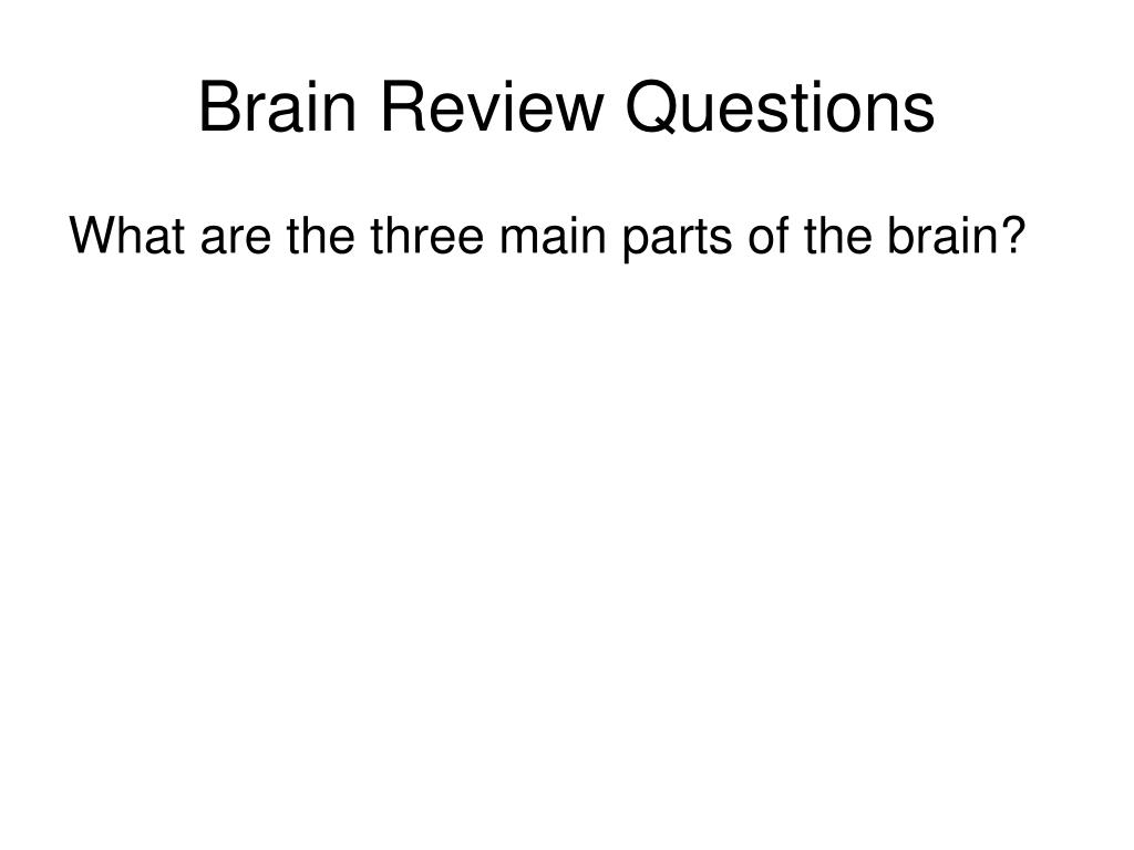 Brain Review Questions