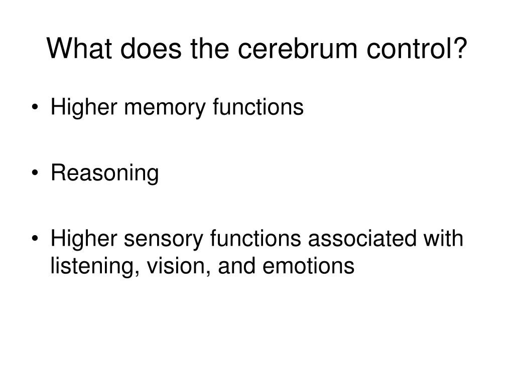 What does the cerebrum control?