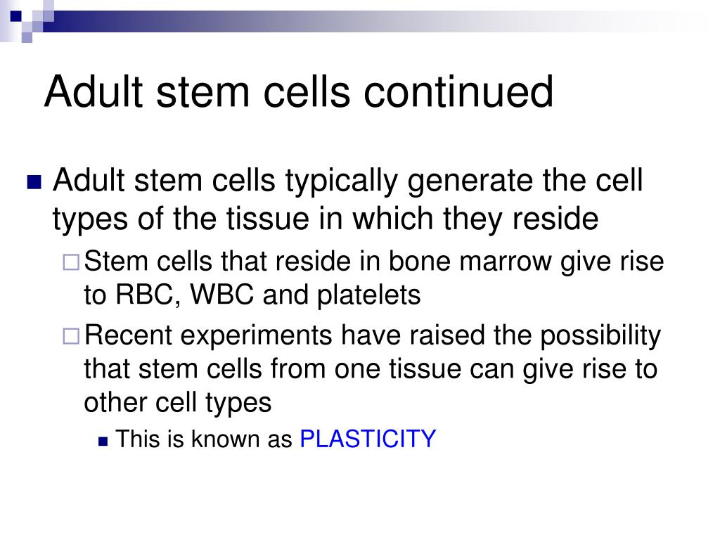 Adult stem cells continued