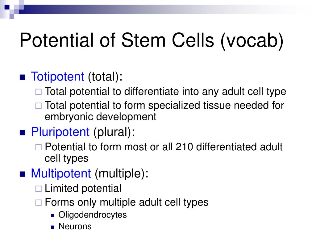 Potential of Stem Cells (vocab)