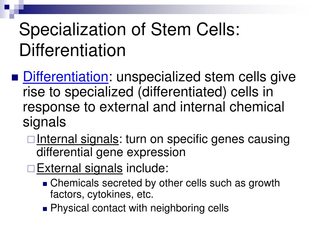 Specialization of Stem Cells: Differentiation