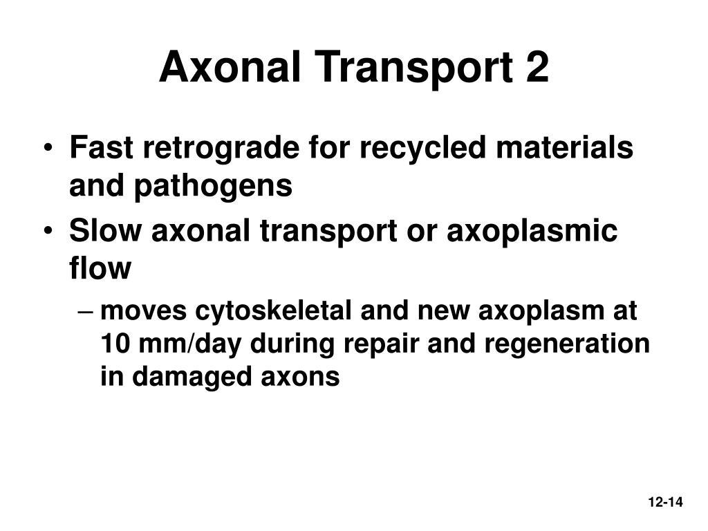 Axonal Transport 2