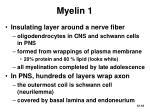 myelin 1