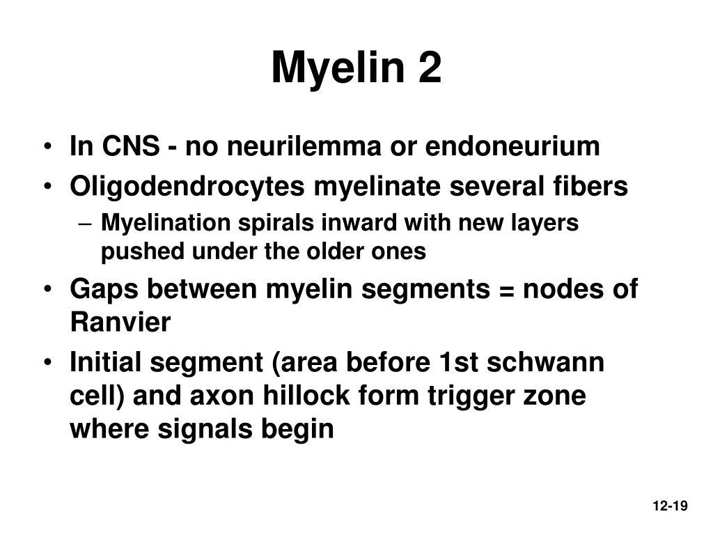 Myelin 2