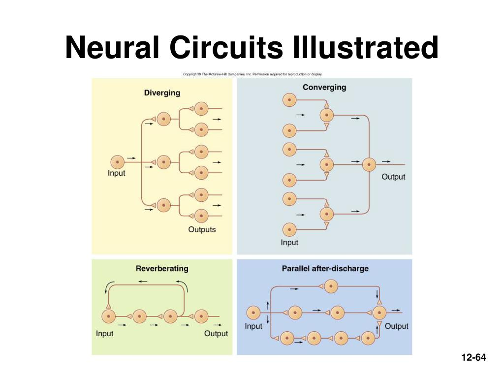 Neural Circuits Illustrated