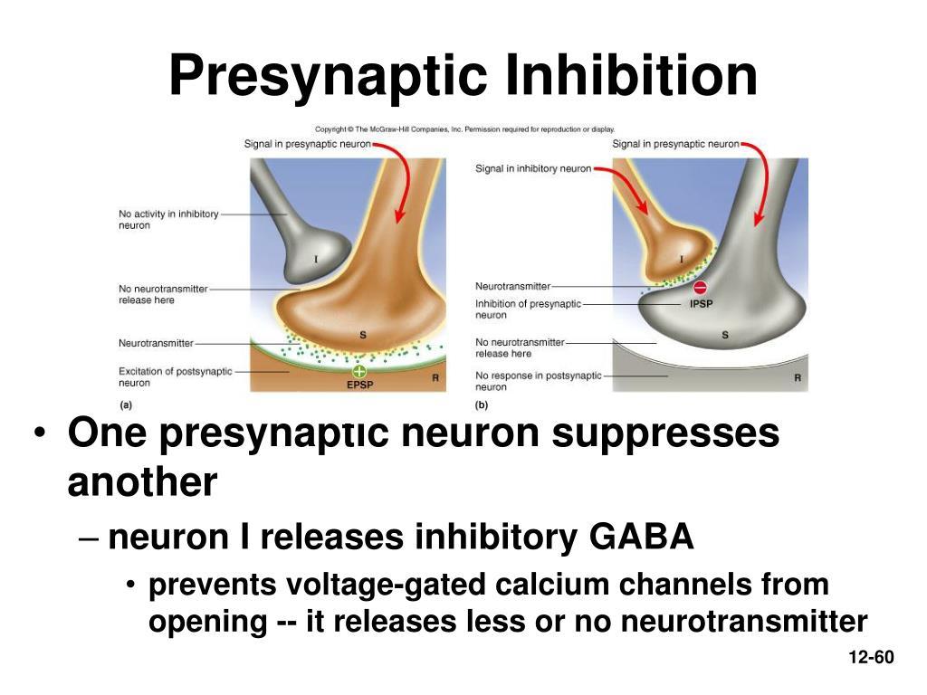 Presynaptic Inhibition