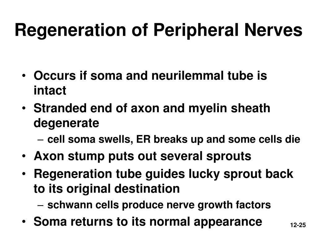 Regeneration of Peripheral Nerves