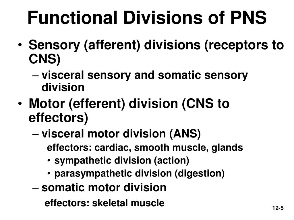 Functional Divisions of PNS
