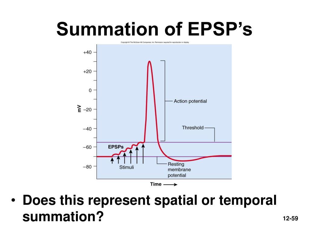 Summation of EPSP's