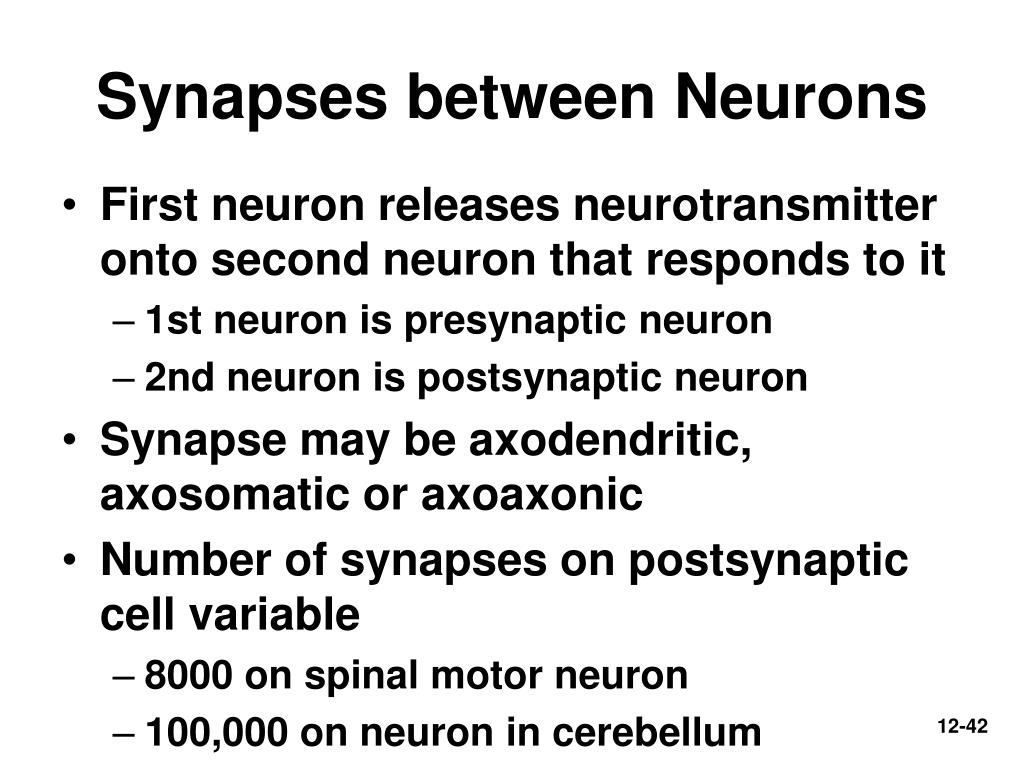 Synapses between Neurons