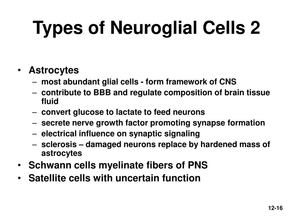 Types of Neuroglial Cells 2
