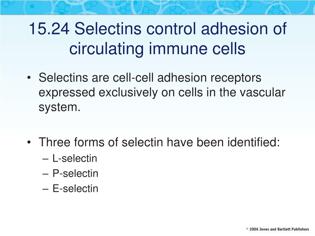 15.24 Selectins control adhesion of circulating immune cells