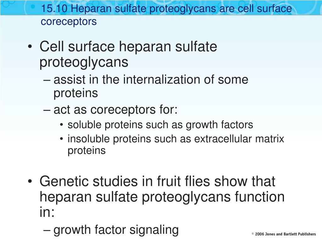 15.10 Heparan sulfate proteoglycans are cell surface coreceptors