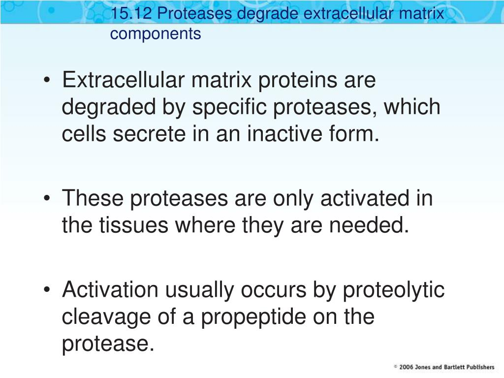 15.12 Proteases degrade extracellular matrix components