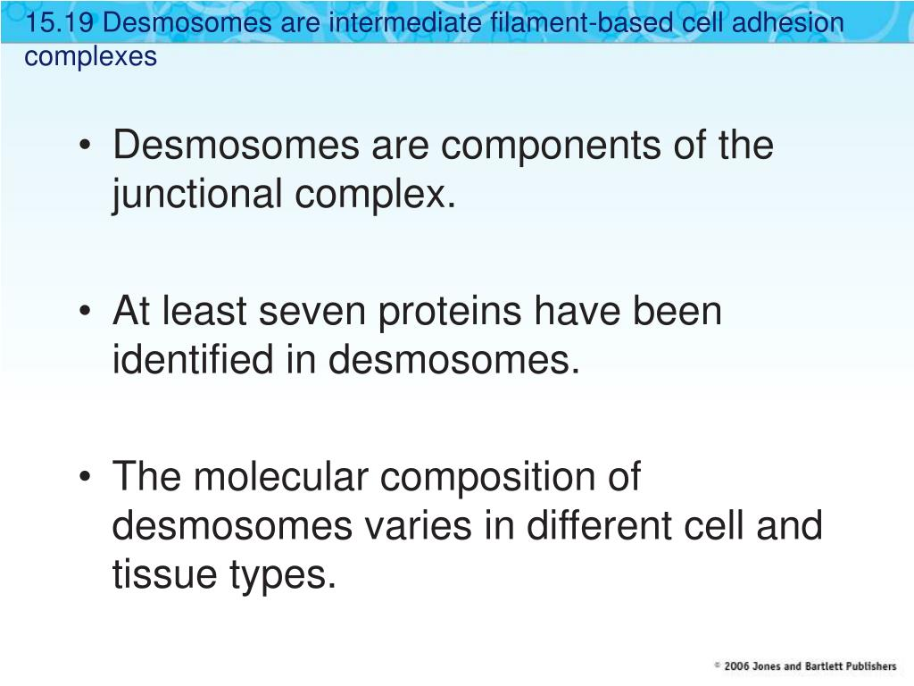 15.19 Desmosomes are intermediate filament-based cell adhesion complexes